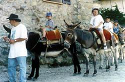 Eselreiten auf Korsika